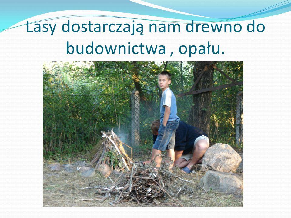 Lasy dostarczają nam drewno do budownictwa, opału.
