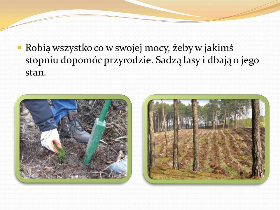Robią wszystko co w swojej mocy, żeby w jakimś stopniu dopomóc przyrodzie. Sadzą lasy i dbają o jego stan.