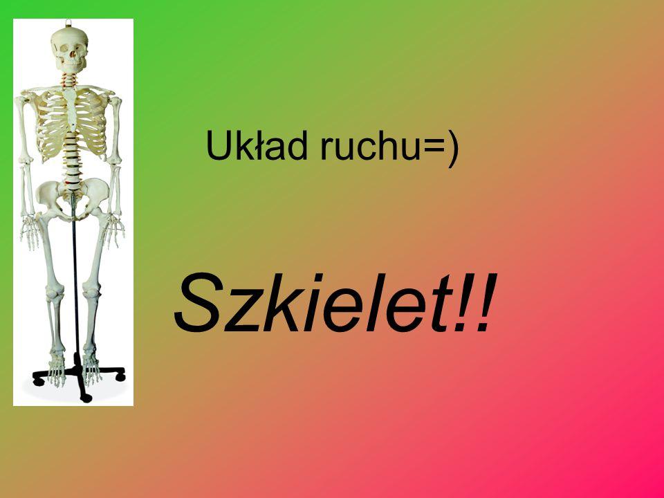 Układ ruchu=) Szkielet!!