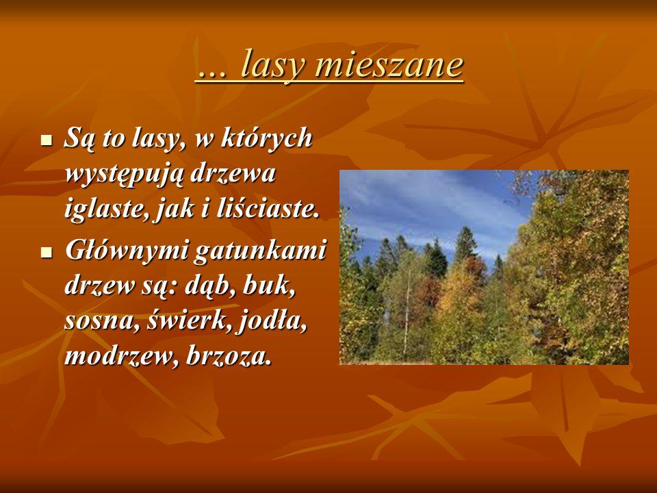 Wiadomości o warstwach lasu mam też, gdyż wiem, że: Wyróżniamy następujące warstwy lasu: Runo leśne ze ściółką Runo leśne ze ściółką Podszyt Podszyt Drzewa Drzewa