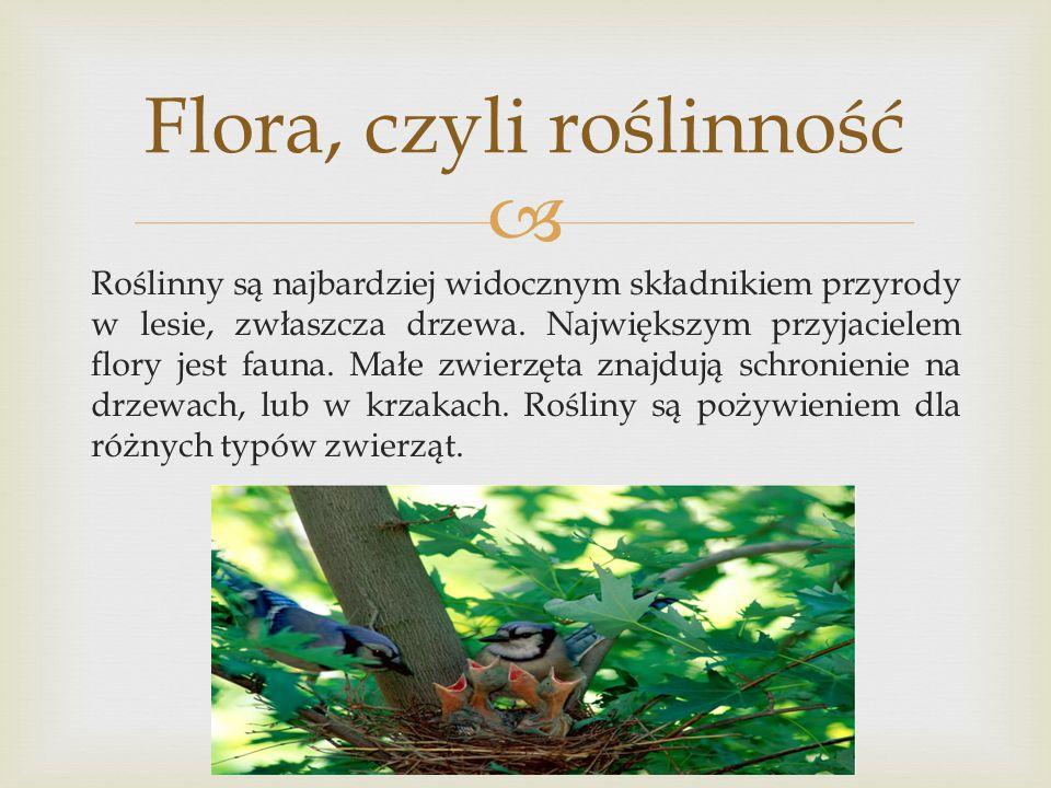  Czy las ma przyjaciół? Oczywiście, że tak! Trzeba zacząć od faktu, że las składa się z: roślinności, zwierząt, grzybów i wielu, wielu innych element