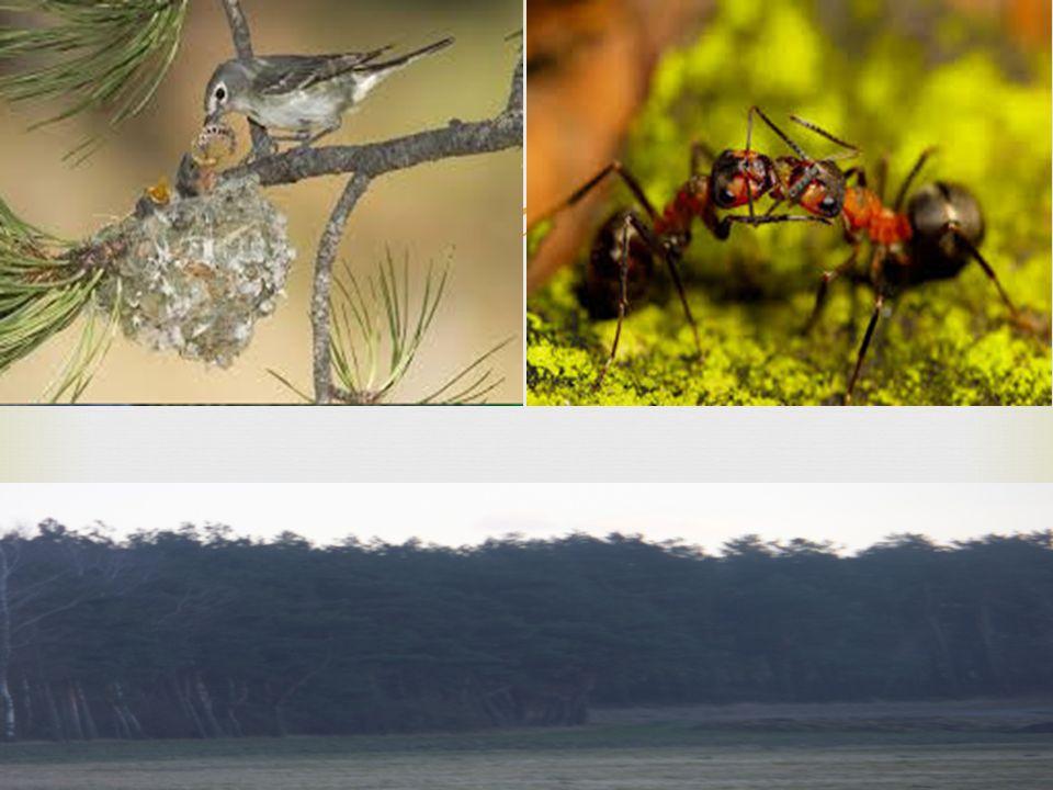  Roślinny są najbardziej widocznym składnikiem przyrody w lesie, zwłaszcza drzewa. Największym przyjacielem flory jest fauna. Małe zwierzęta znajdują
