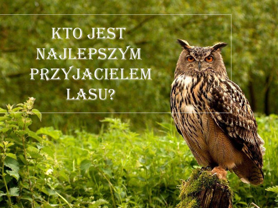 Kto jest najlepszym przyjacielem lasu?