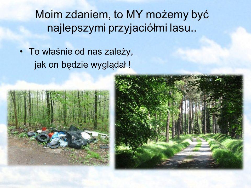 Moim zdaniem, to MY możemy być najlepszymi przyjaciółmi lasu..