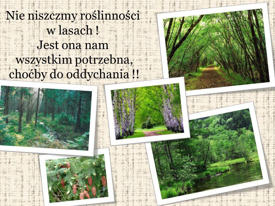 Nie niszczmy roślinności w lasach ! Jest ona nam wszystkim potrzebna, choćby do oddychania !!