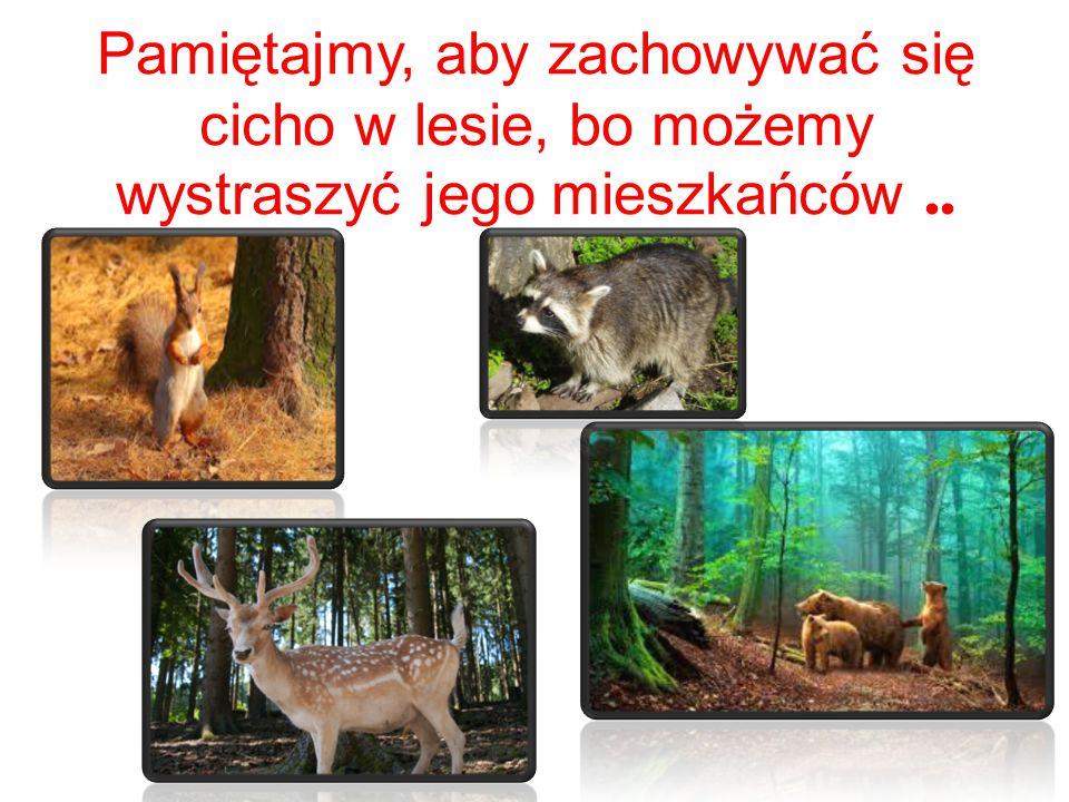 Pamiętajmy, aby zachowywać się cicho w lesie, bo możemy wystraszyć jego mieszkańców..