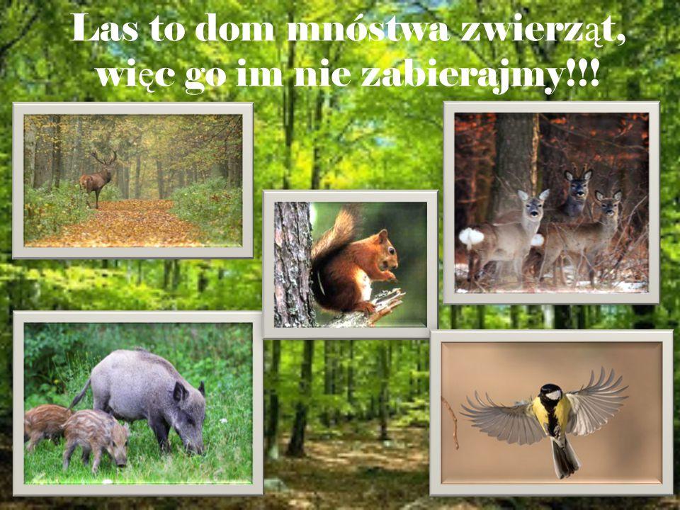 Stosując te zasady, naprawdę możemy stać się prawdziwymi przyjaciółmi lasu Pamiętajmy, że to jest czyjś dom i nie powinniśmy go naruszać !