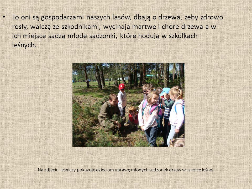 Na zdjęciu leśniczy pokazuje dzieciom uprawę młodych sadzonek drzew w szkółce leśnej.