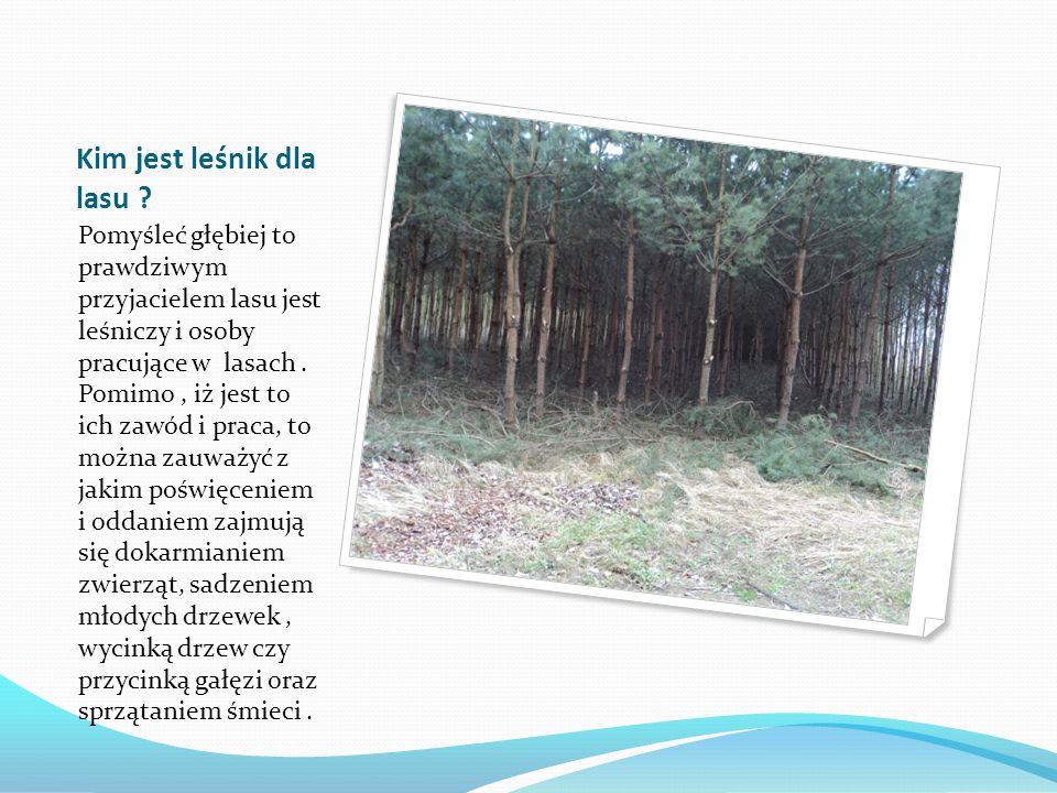 Co możemy zauważyć w lesie ?