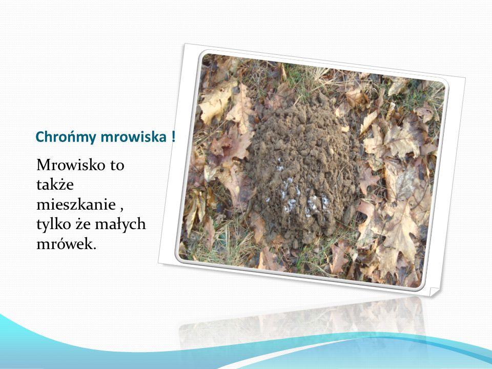 Chrońmy mrowiska ! Mrowisko to także mieszkanie, tylko że małych mrówek.