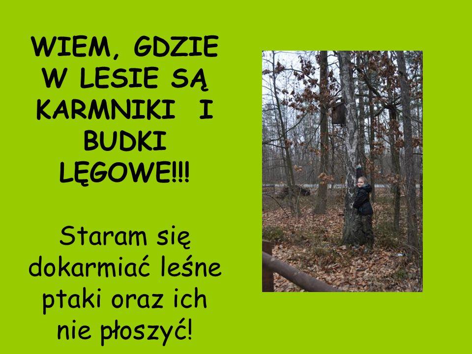 WIEM, GDZIE W LESIE SĄ KARMNIKI I BUDKI LĘGOWE!!.