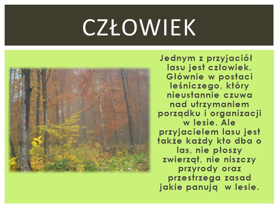 Jednym z przyjaciół lasu jest człowiek. Głównie w postaci leśniczego, który nieustannie czuwa nad utrzymaniem porządku i organizacji w lesie. Ale przy