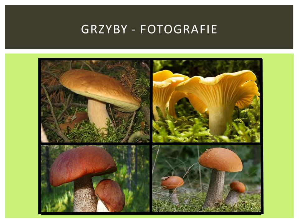 GRZYBY - FOTOGRAFIE
