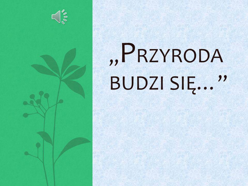 źródło zdjęcia : www.hdmax.pl