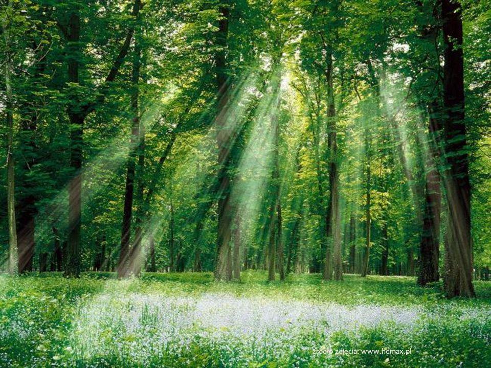 źródło zdjęcia: www. ewaalicjaslomska.blox.pl