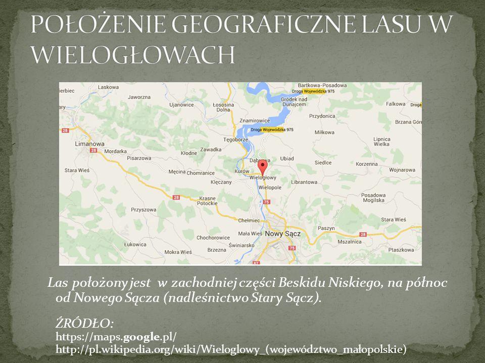 Las położony jest w zachodniej części Beskidu Niskiego, na północ od Nowego Sącza (nadleśnictwo Stary Sącz). ŹRÓDŁO: https://maps.google.pl/ http://pl