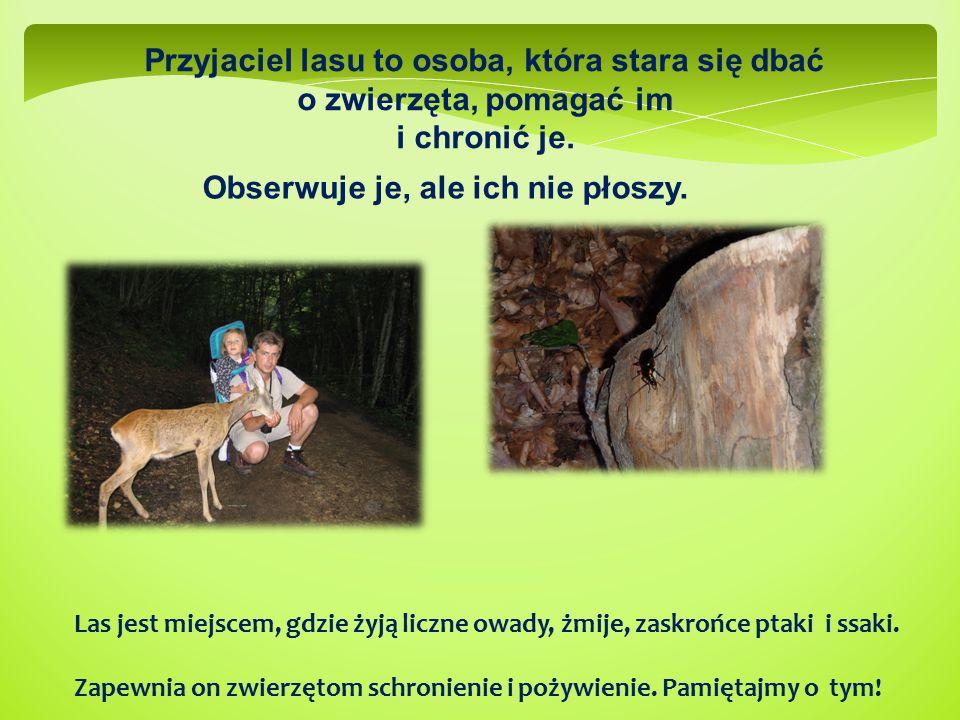 Przyjaciel lasu to osoba, która stara się dbać o zwierzęta, pomagać im i chronić je. Las jest miejscem, gdzie żyją liczne owady, żmije, zaskrońce ptak