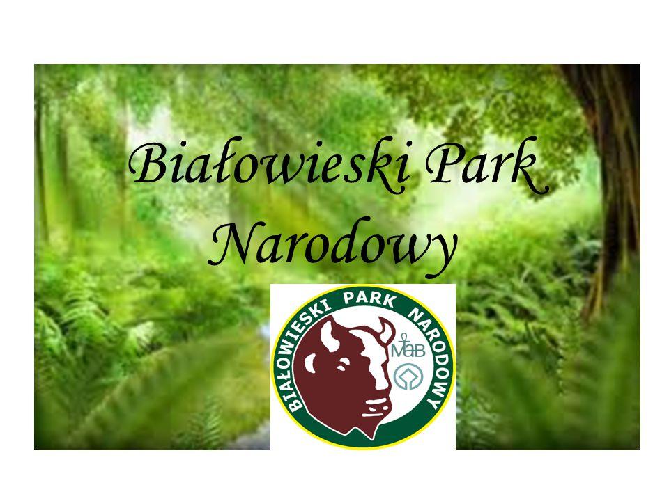 Położony jest w północno-wschodniej części Polski, w województwie podlaskim, utworzony z Nadleśnictwa Rezerwat jako Park Narodowy w Białowieży obowiązującym od 4 sierpnia 1932 roku Rozporządzeniem Ministra Rolnictwa i Reform Rolnych, restytuowany w obecnej formie z mocy rozporządzenia Rady Ministrów z dnia 21 listopada 1947 roku.