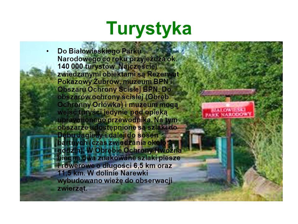 Turystyka Do Białowieskiego Parku Narodowego co roku przyjeżdża ok. 140 000 turystów. Najczęściej zwiedzanymi obiektami są Rezerwat Pokazowy Żubrów, m