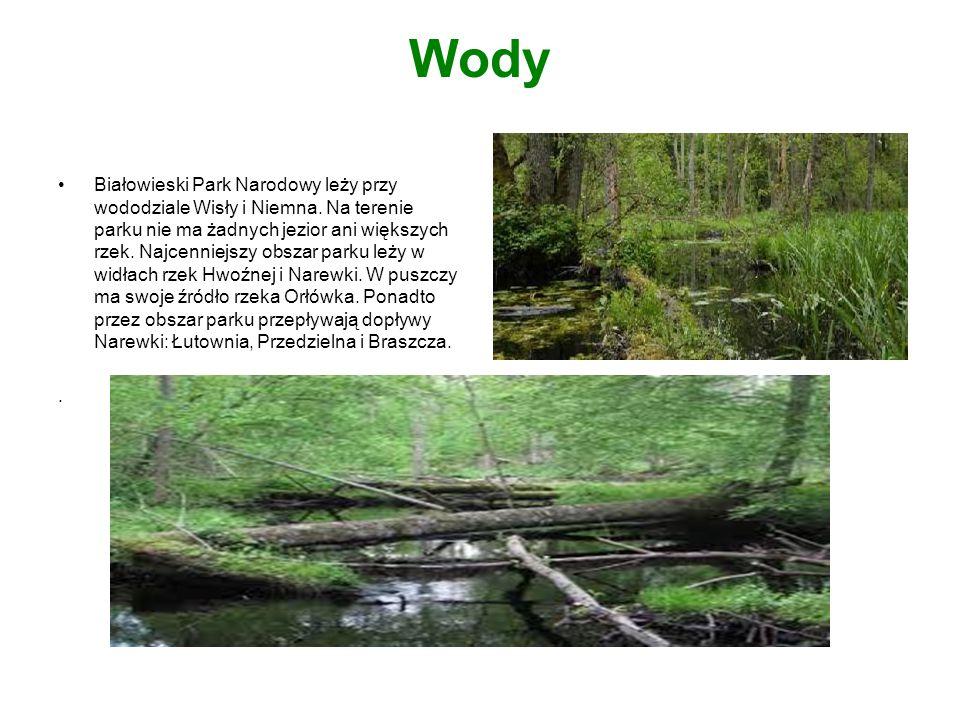 Wody Białowieski Park Narodowy leży przy wododziale Wisły i Niemna. Na terenie parku nie ma żadnych jezior ani większych rzek. Najcenniejszy obszar pa