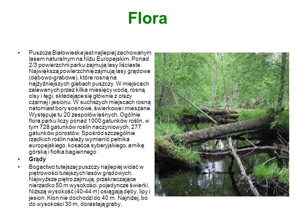 Flora Puszcza Białowieska jest najlepiej zachowanym lasem naturalnym na Niżu Europejskim. Ponad 2/3 powierzchni parku zajmują lasy liściaste. Najwięks