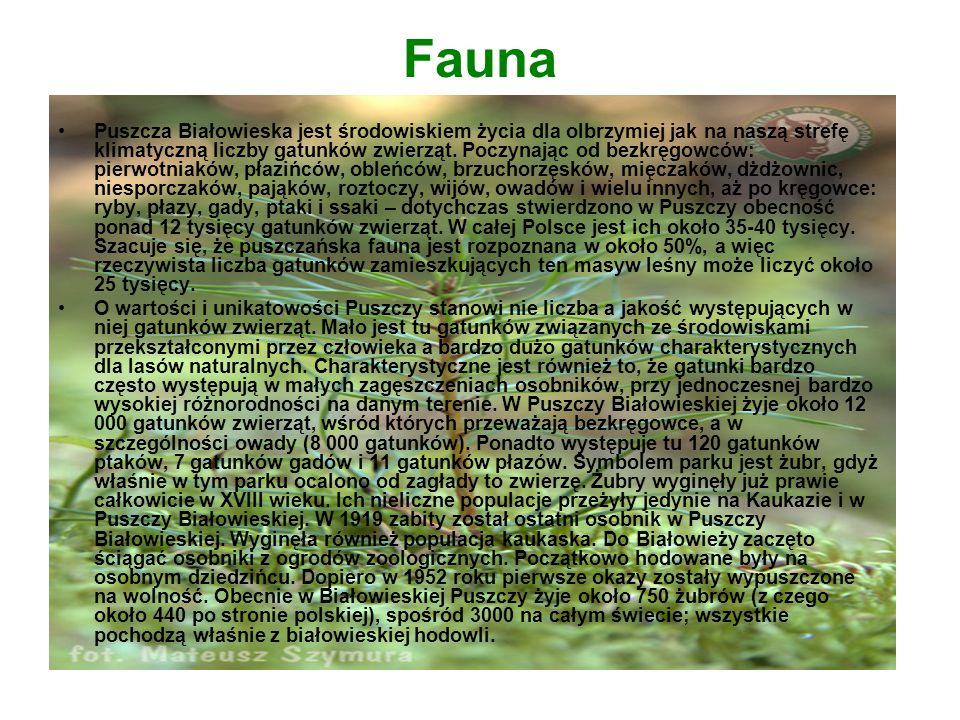 Fauna Puszcza Białowieska jest środowiskiem życia dla olbrzymiej jak na naszą strefę klimatyczną liczby gatunków zwierząt. Poczynając od bezkręgowców: