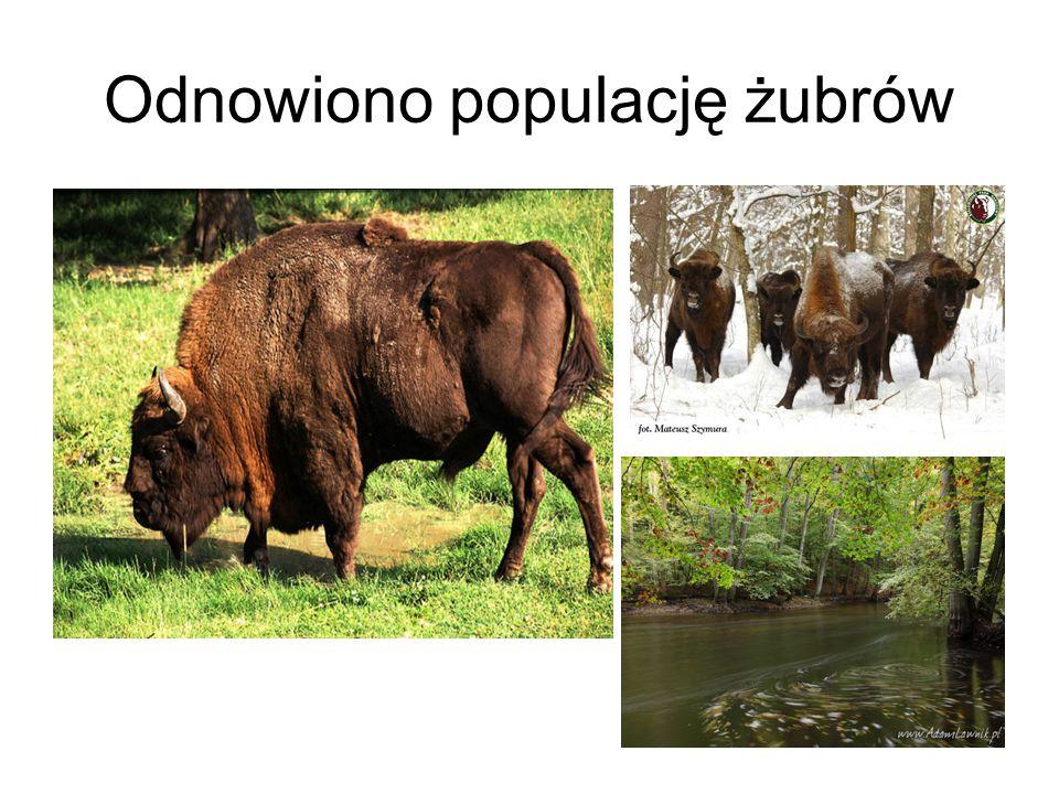 Turystyka Do Białowieskiego Parku Narodowego co roku przyjeżdża ok.