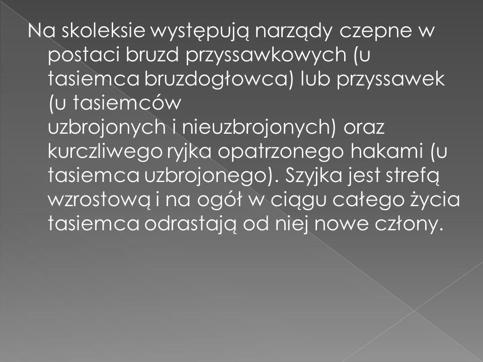 Na skoleksie występują narządy czepne w postaci bruzd przyssawkowych (u tasiemca bruzdogłowca) lub przyssawek (u tasiemców uzbrojonych i nieuzbrojonyc
