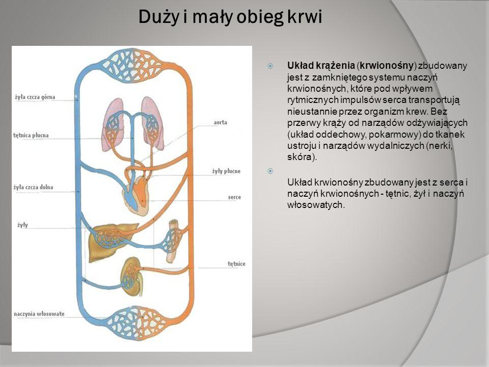 Duży i mały obieg krwi  Układ krążenia (krwionośny) zbudowany jest z zamkniętego systemu naczyń krwionośnych, które pod wpływem rytmicznych impulsów