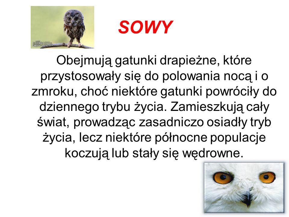CECHY Sowy nie są spokrewnione z ptakami drapieżnymi, ale posiadają wiele cech wspólnych, wynikających z podobnego trybu życia.