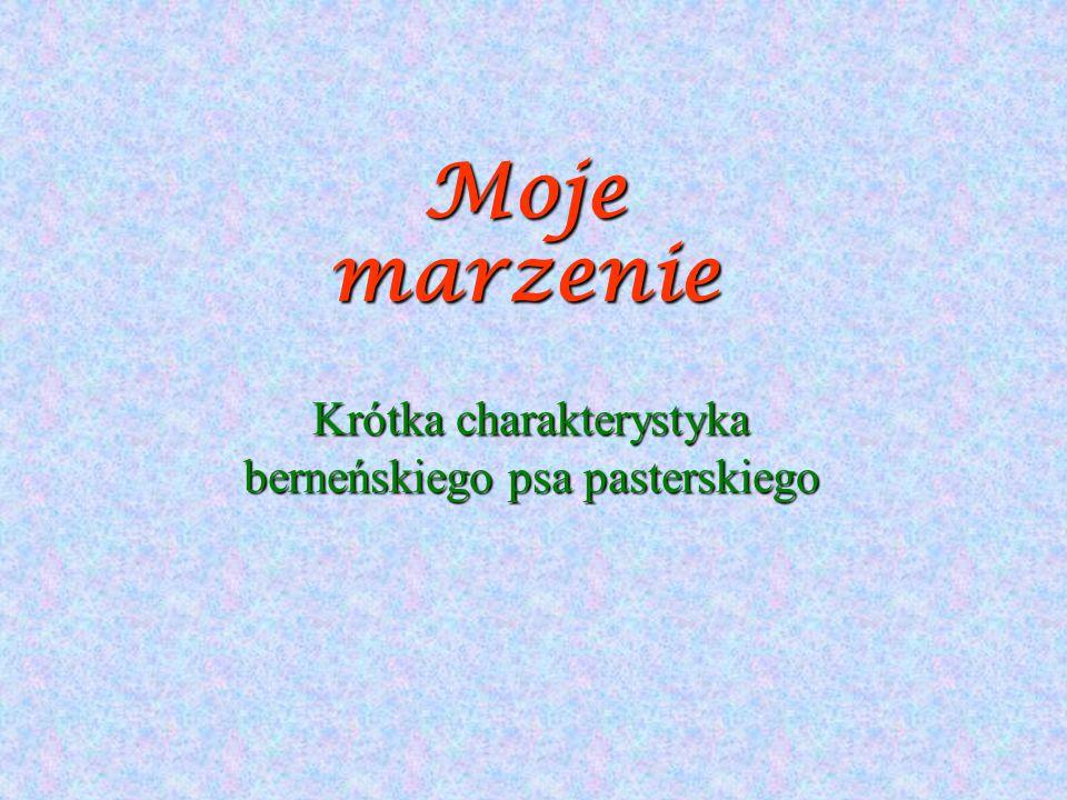 Moje marzenie Krótka charakterystyka berneńskiego psa pasterskiego