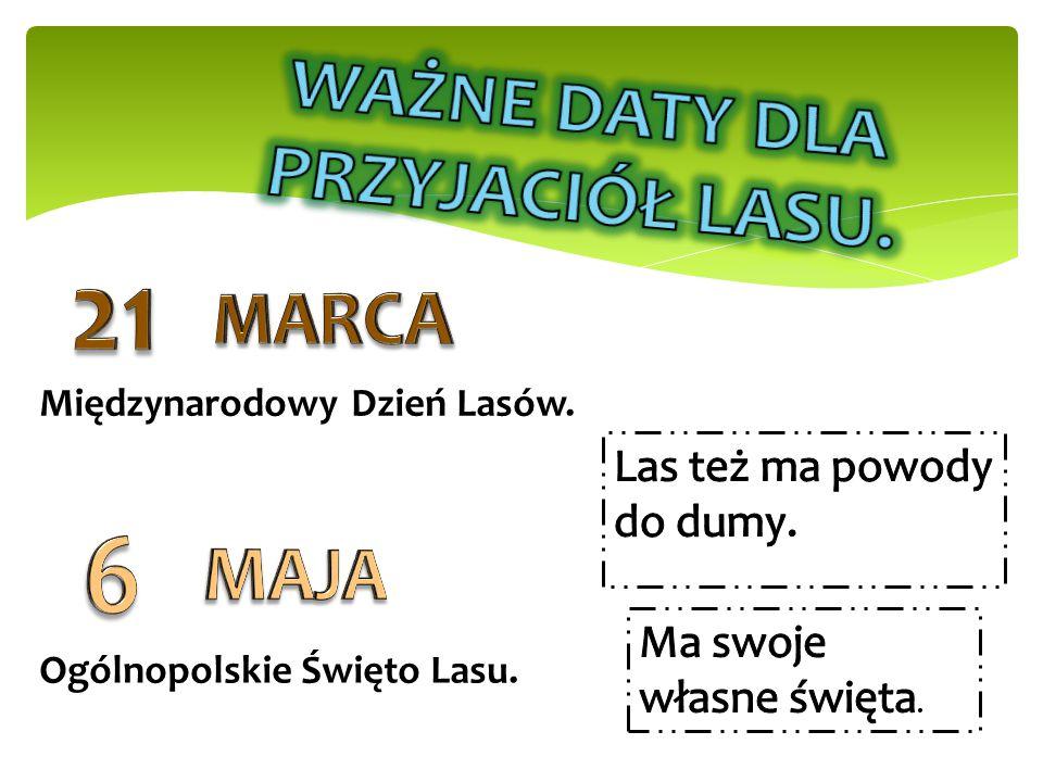 Międzynarodowy Dzień Lasów. Ogólnopolskie Święto Lasu.