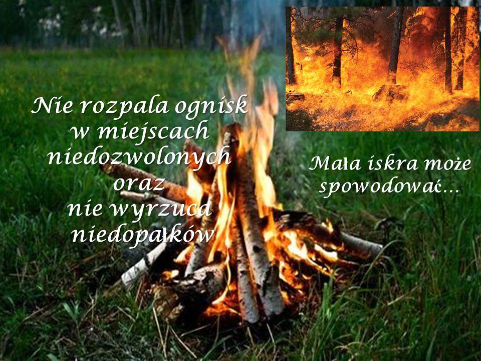 Ma ł a iskra mo ż e spowodowa ć … Nie rozpala ognisk w miejscach niedozwolonych oraz nie wyrzuca niedopa ł ków niedopa ł ków