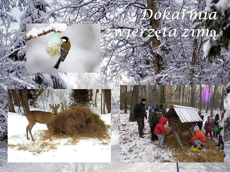 Dokarmia zwierz ę ta zim ą