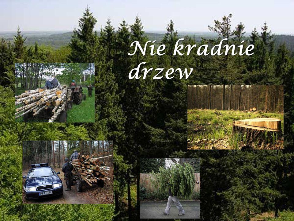 Nie kradnie drzew