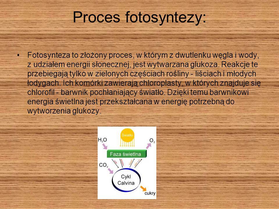 Proces fotosyntezy: Fotosynteza to złożony proces, w którym z dwutlenku węgla i wody, z udziałem energii słonecznej, jest wytwarzana glukoza. Reakcje