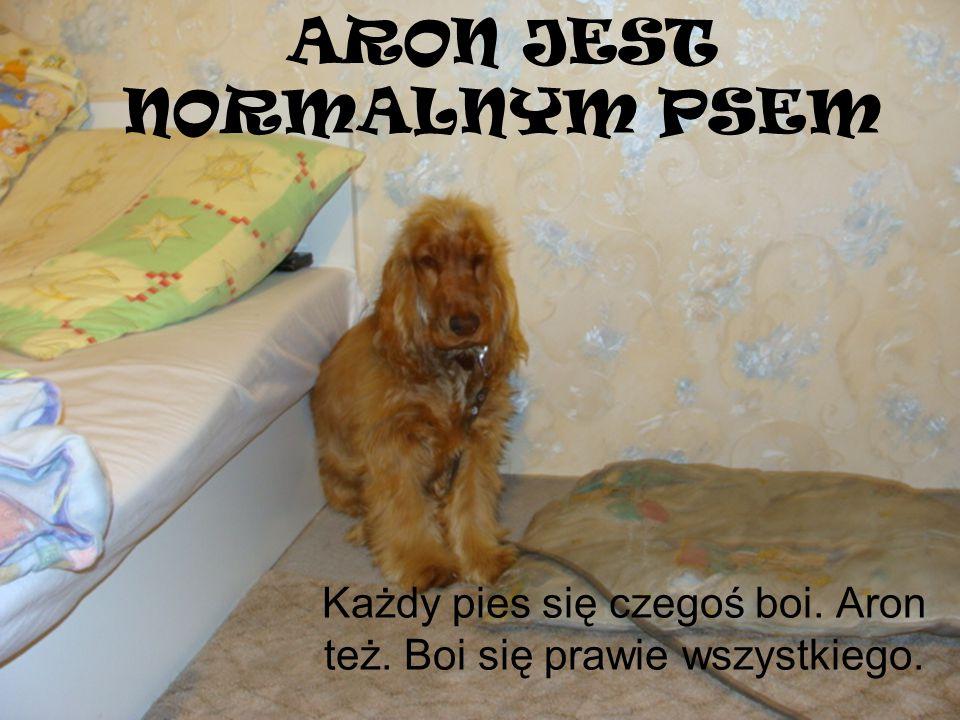 ARON JEST NORMALNYM PSEM Każdy pies się czegoś boi. Aron też. Boi się prawie wszystkiego.