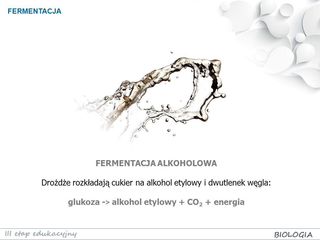 FERMENTACJA FERMENTACJA ALKOHOLOWA Drożdże rozkładają cukier na alkohol etylowy i dwutlenek węgla: glukoza - > alkohol etylowy + CO 2 + energia