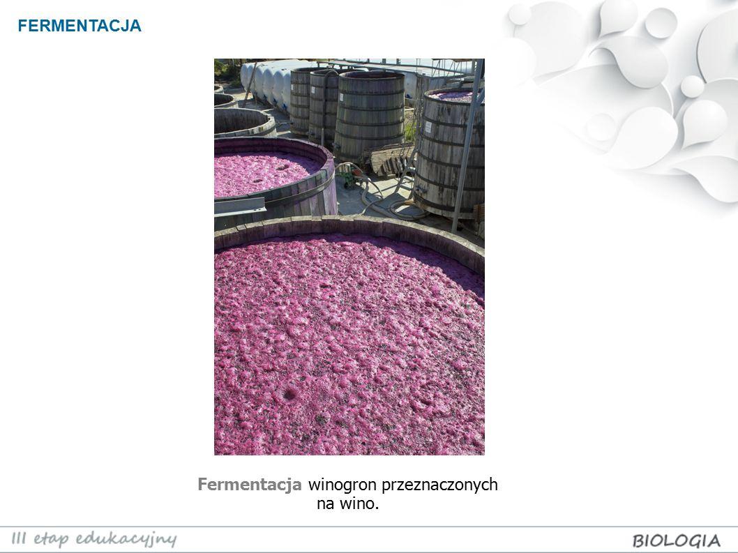FERMENTACJA Fermentacja winogron przeznaczonych na wino.