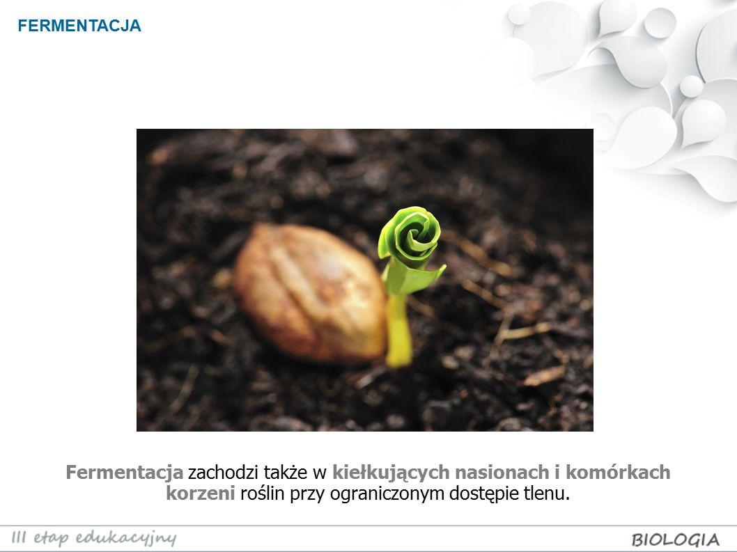 Fermentacja zachodzi także w kiełkujących nasionach i komórkach korzeni roślin przy ograniczonym dostępie tlenu. FERMENTACJA