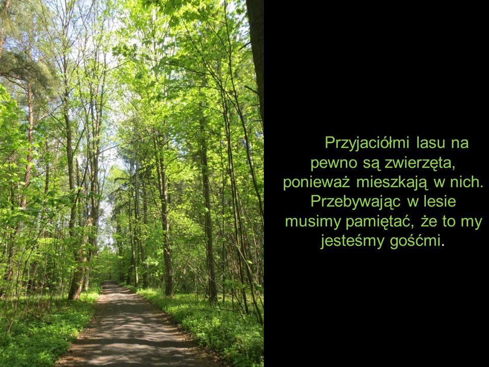 Przyjaciółmi lasu na pewno są zwierzęta, ponieważ mieszkają w nich.