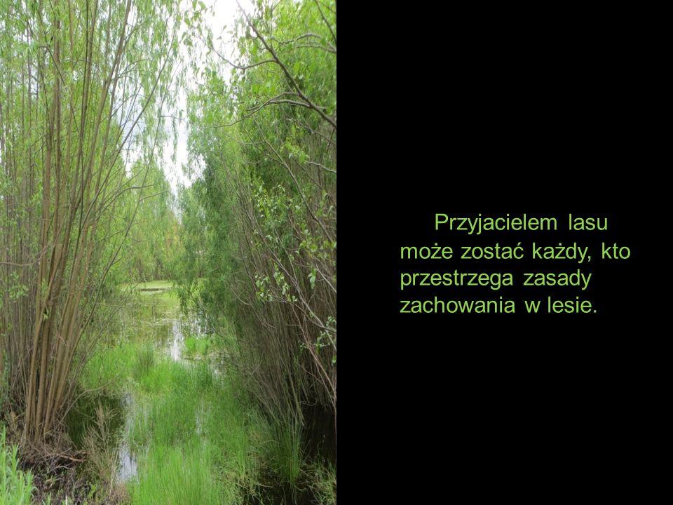 Przyjacielem lasu może zostać każdy, kto przestrzega zasady zachowania w lesie.