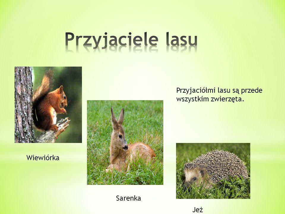 Przyjaciółmi lasu są przede wszystkim zwierzęta. Wiewiórka Sarenka Jeż