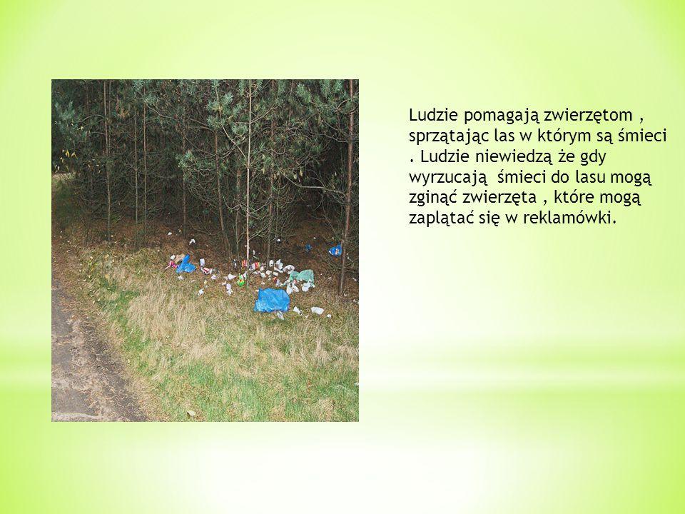 Ludzie pomagają zwierzętom, sprzątając las w którym są śmieci. Ludzie niewiedzą że gdy wyrzucają śmieci do lasu mogą zginąć zwierzęta, które mogą zapl