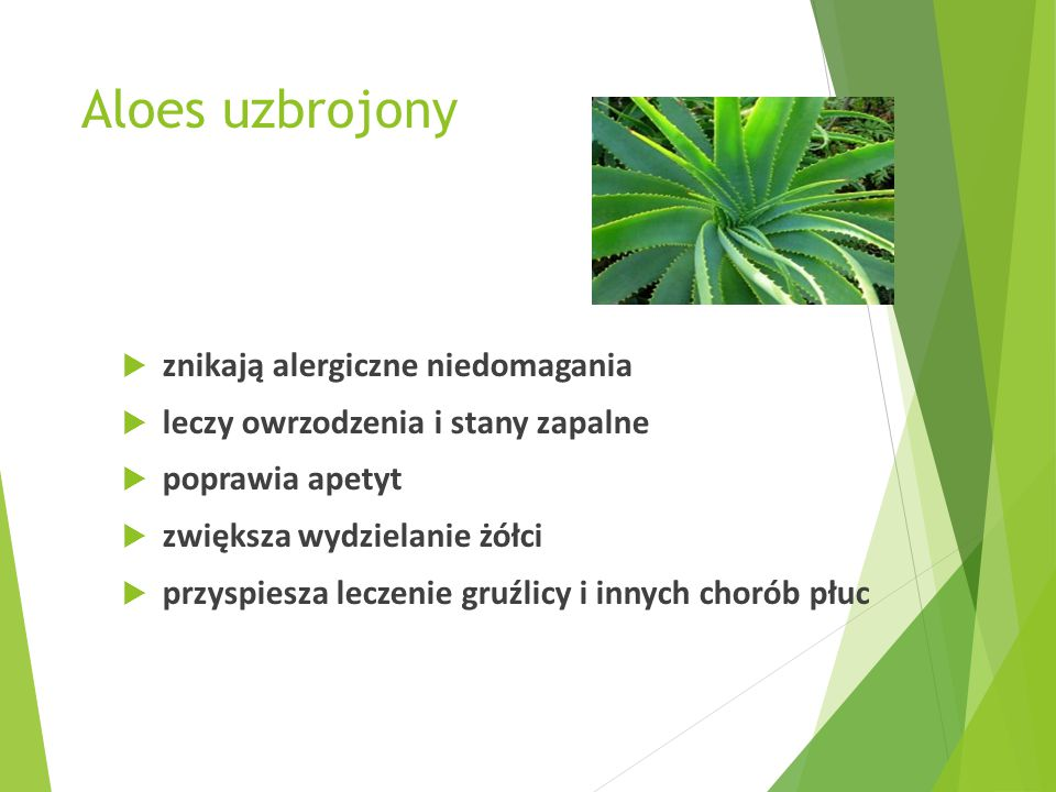 Mięta pieprzowa  liście zwiększają wydzielanie soku żołądkowego, pobudzają wytwarzanie żółci, usprawniają pracę jelit  stosowane są jako środek wiatropędny, przy zaburzeniach trawienia, w schorzeniach wątroby i dróg żółciowych  mają także właściwości przeciwbakteryjne i nieznacznie uspokajające  olejek miętowy ma podobne, ale silniejsze działanie, szczególnie jako środek odkażający i uspokajający