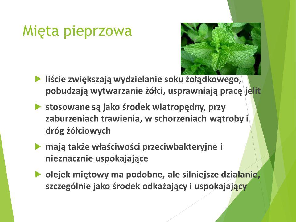 Mięta pieprzowa  liście zwiększają wydzielanie soku żołądkowego, pobudzają wytwarzanie żółci, usprawniają pracę jelit  stosowane są jako środek wiat