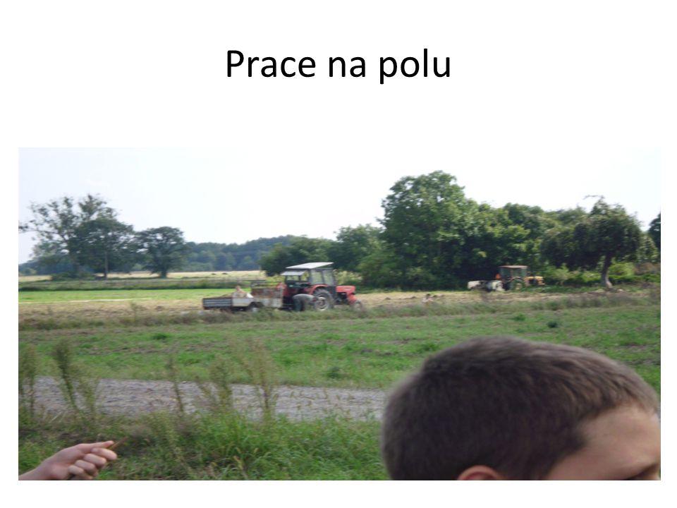 Prace na polu