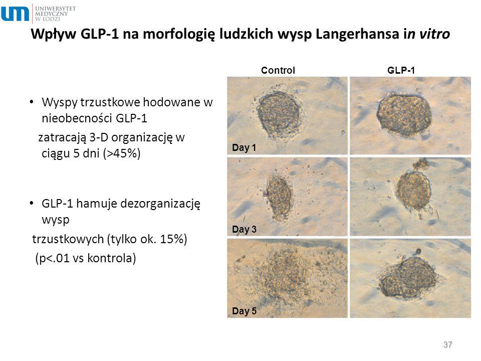 ControlGLP-1 Day 1 Day 3 Day 5 Wpływ GLP-1 na morfologię ludzkich wysp Langerhansa in vitro Wyspy trzustkowe hodowane w nieobecności GLP-1 zatracają 3