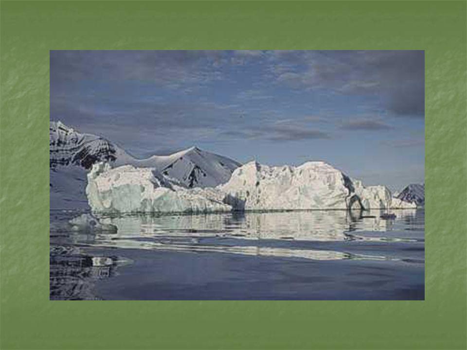 UchatkiUchatkiUchatkiUchatki W wodzie niezwykle zwinne, mogą przebywać pod jej powierzchnią ok.