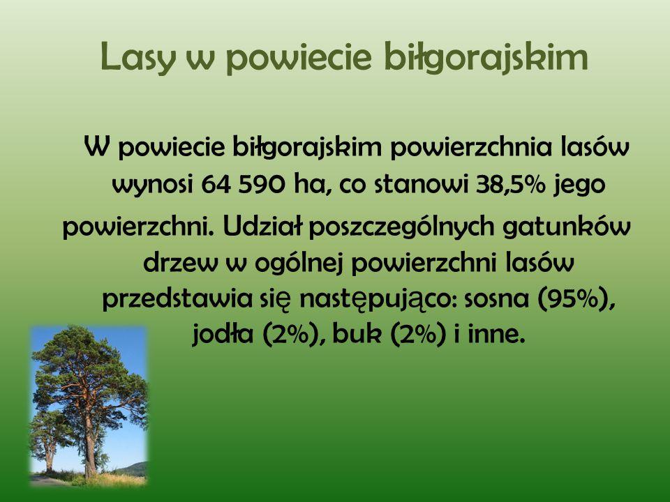 Lasy w powiecie biłgorajskim W powiecie biłgorajskim powierzchnia lasów wynosi 64 590 ha, co stanowi 38,5% jego powierzchni. Udział poszczególnych gat